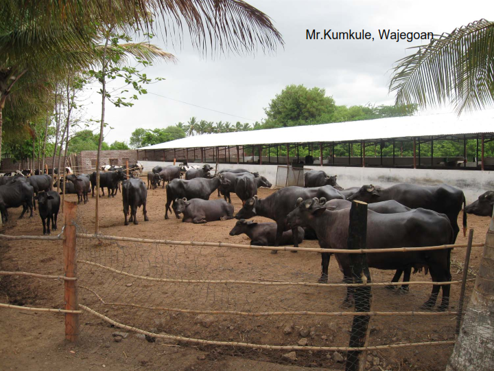 Starting A Dairy Farm In India Vethelplineindia Co In