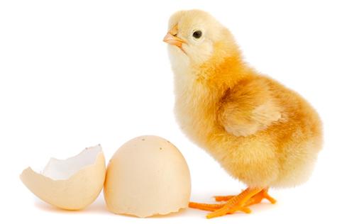 Poultry-Hatchery