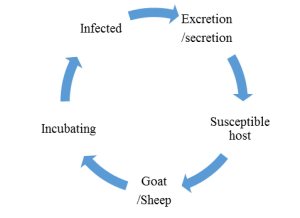 Transmission Cycle of PPR virus