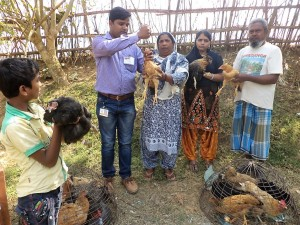 Administration of de-wormer to enrolled village chicken